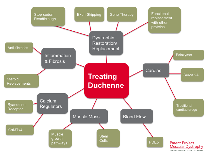 Behandlungsansätze (Quelle PPMD)